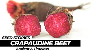 SEED STORIES   Crapaudine Beet: Ancient and Timeless