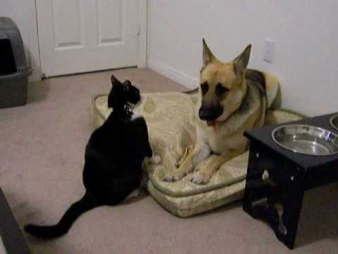 Crazy Cat Attacks Dog!