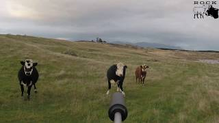 Cattle kill shot compilation