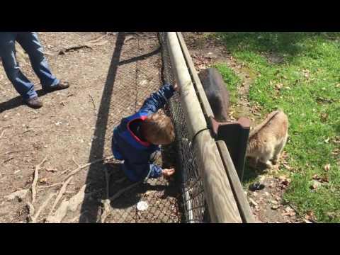 Tote Tiere im Wildpark in Feldkirch! Der Grund: Falsche Fütterung durch Besucher