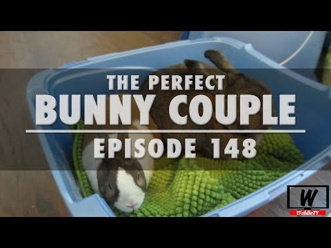 Ep.148 The Perfect Bunny Couple | WahlieTV