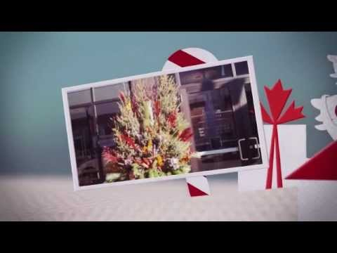 Commercial Holiday Decoration Services Minneapolis by Lyndale Plants