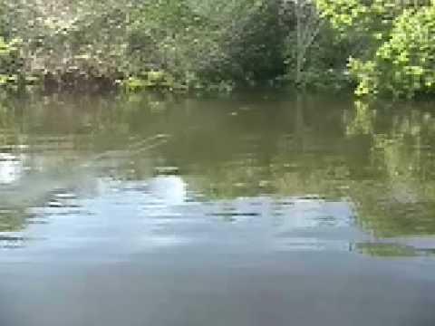 Pescaria de robalos em Jaguaripe-Ba
