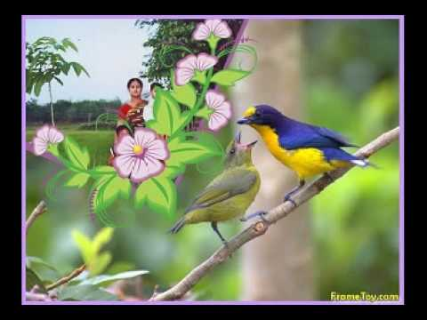 sathe bangla song tumi khacha hole ami hobo pakhi best bangla...