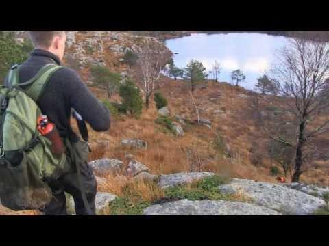 Rugdejakt / Woodcock Hunting