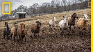 Photographing the Strength and Beauty of Rescued Horses | National Geographic