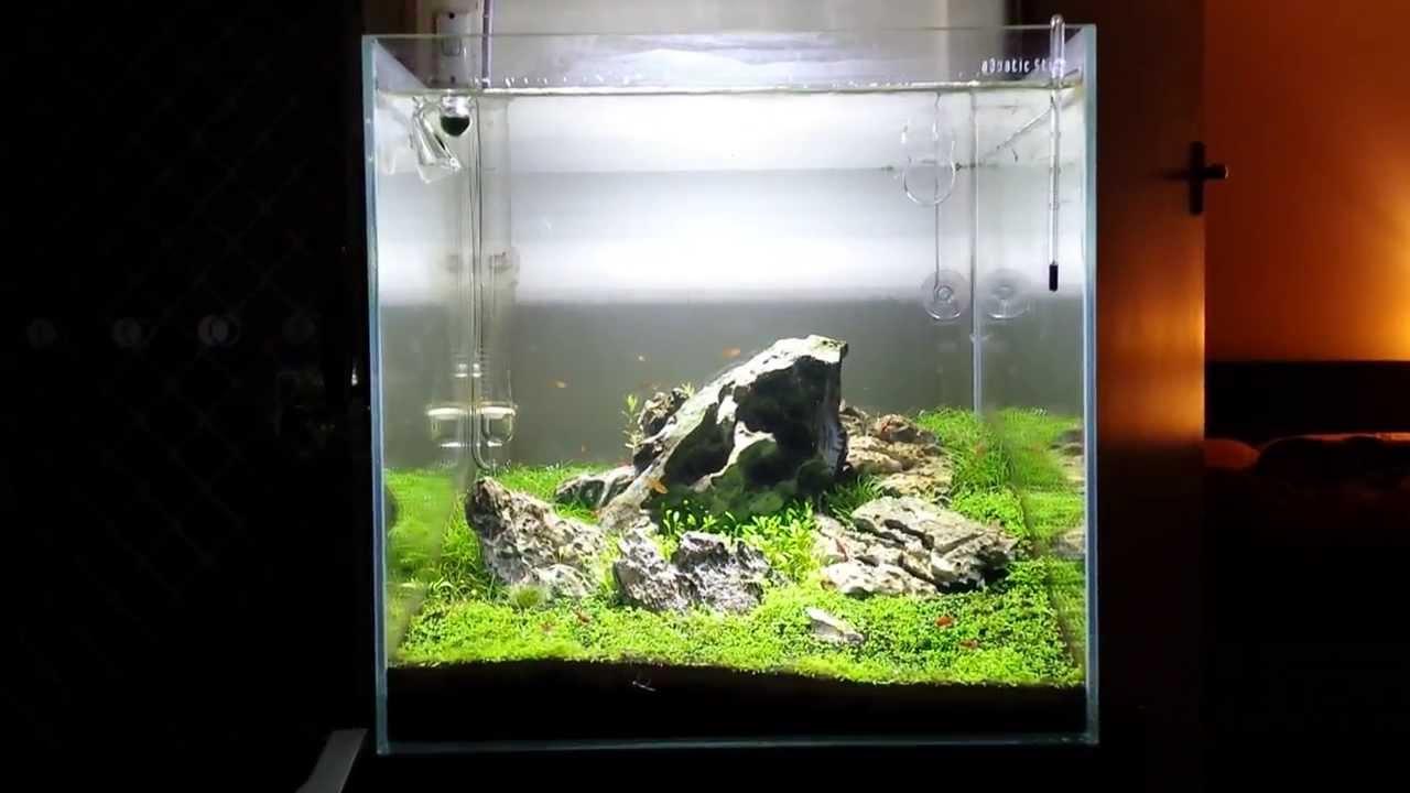 40cm iwagumi cube planted aquarium youtube for Aquarium cube