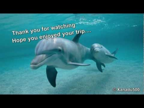 sleeping-dolphin-music-and-nature-sounds-for-relaxation-meditation-and-reiki.html
