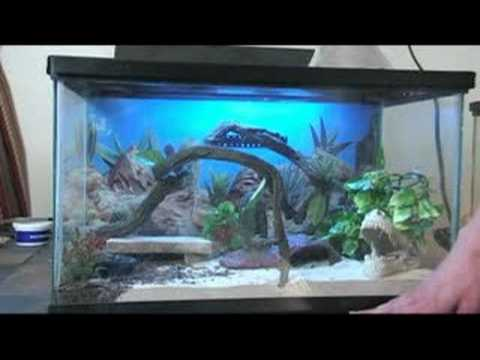 How To Care For Leopard Geckos Leopard Gecko Habitats