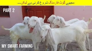 14 | I want to start but | مجھے گوٹ فارمنگ شروع کرنی ہے لیکن | Goat Farming Episode 2
