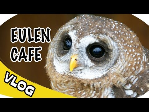 EULEN CAFE in JAPAN und andere TIERE - Okinawa Japan Vlog