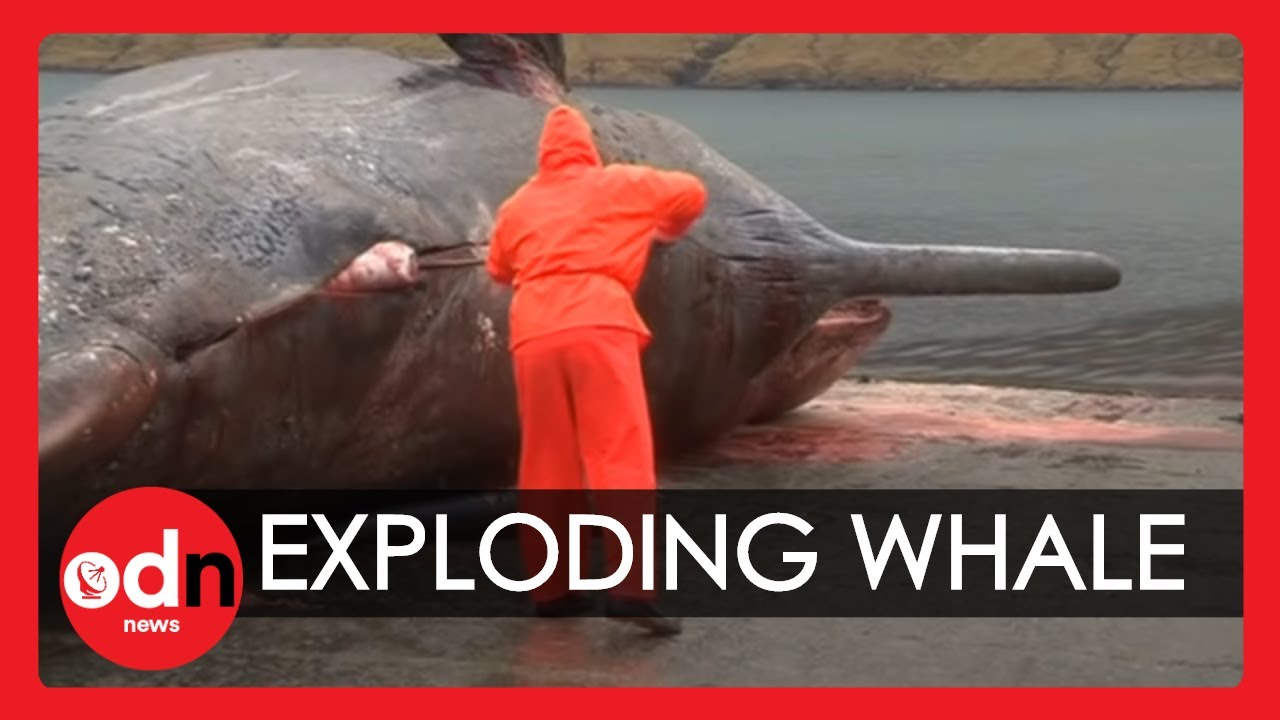 Sperm whale explosion tainan pictures