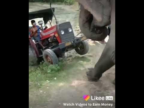 Power of Elefant