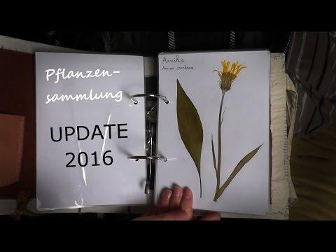 Meine Pflanzensammlung - UPDATE 2016 - Pfennigkraut, Arnika,...