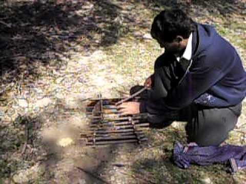 Como se hace trampa con troncos para aves youtube - Como cazar ratones en casa ...