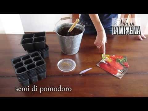 La semina del pomodoro per ottenere piantine con pane di terra