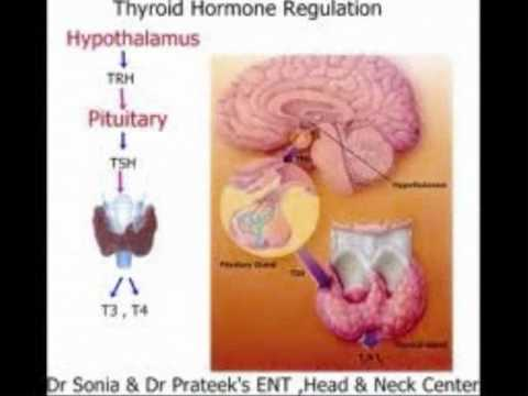 FLUORIDE :  Thyroid Hormones   8 / 20