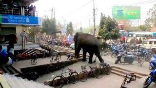 King Elephant on road show in Siliguri