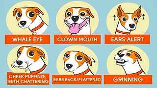 🐶 10 SIGNS TO UNDERSTAND YOUR DOG BETTER 🐩🐕
