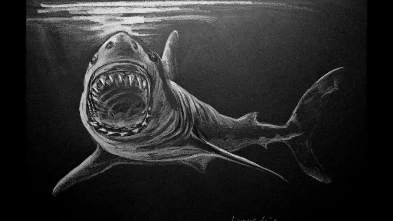 Hoe Teken Je Een Grote Witte Haai Youtube