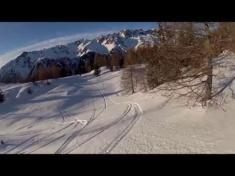 Samoyed extreme