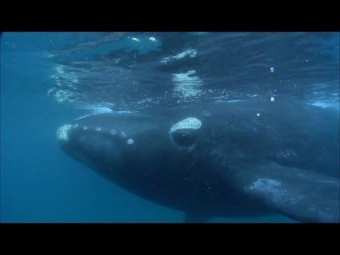 Massive whale wants human company! | Crazy Cameramen Episode 4