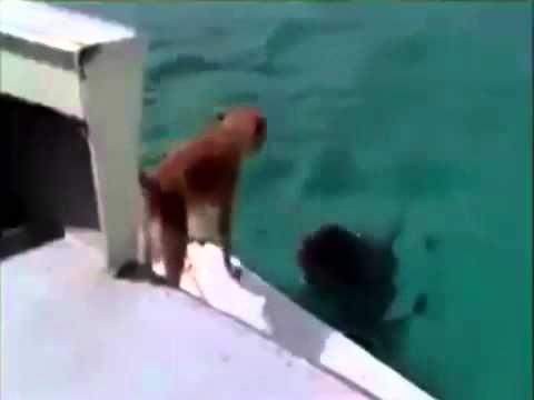 image vid�o سبحانك ربي ما أعظمك !!! ( دلفين ينقذ كلب من الغرق