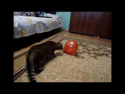 Shark Balloon Cat Cat Scared by a Balloon