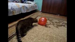 Cat scared by a balloon