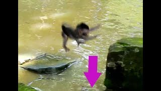 Unbelievable Newborn! Tiny new baby jump fail in the water|Newborn Timo fails in the water