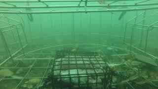 I dropped my crab trap at my marina. You won