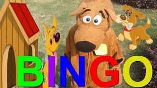 Bingo Dog Song Nursery Rhyme with Lyrics   Dog Song by Care ki Dunya