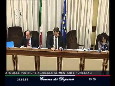 Roma - Audizione Sottosegretario Castiglione (24.06.15)