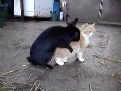 Rencontre entre 2 lapins
