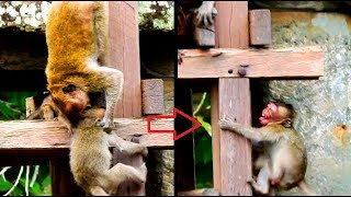 Poor little monkey Jessie got bite by Jill/Pity Jessie very scare , cry so loudly.