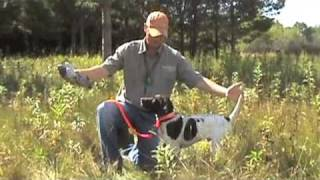 Free Hunting Dog Training Videos - Willow Creek Kennels - Positive Reinforcement Training