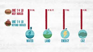 How bad for the environment is one beef burger?