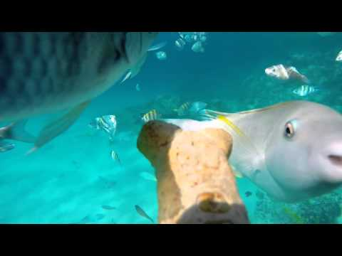 Parrot fish chew of man's nose