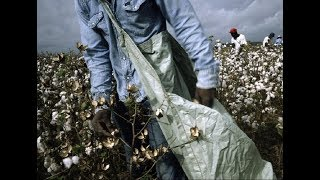 1619 From Chattel Slavery to 2017 Modernized Slavery ~ 1877 Jim Crow to 2017 New Jim Crow