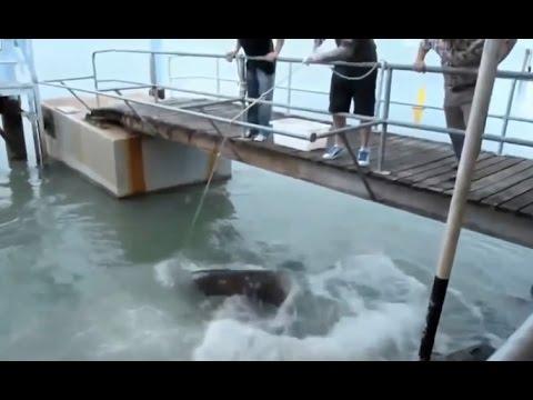 Mọi người đã rất kinh ngạc khi anh ấy câu được con thủy quái khổng lồ