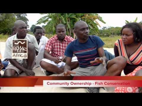 Fish for Tomorrow Lake Malawi - Community Fish Conservation - RIPPLE Africa
