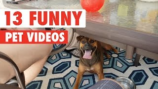 13 Funny Pets   Funny Pet Video Compilation 2017