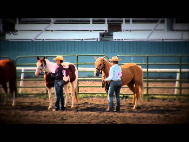 4-H Horse Show 8-03-2014