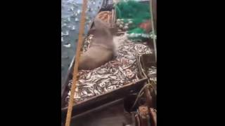 Russian fishermen found a huge sea lion in their fishing net