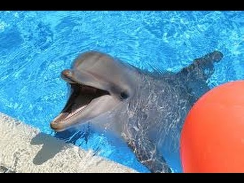 Siegfried & Roy's Secret Garden and Dolphin Habitat – Mirage Hotel & Casino Las Vegas