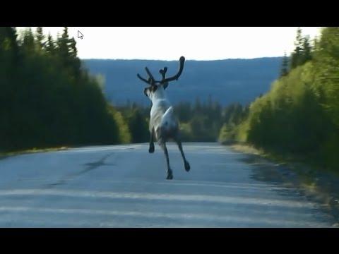 Amazing Close Encounter With Swedish Wildlife