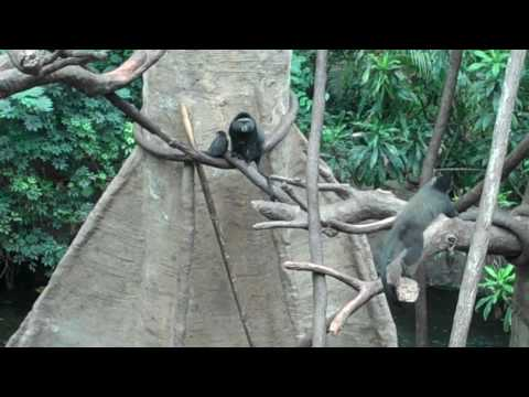 A family of Monkeys playing in a tree at Omaha's Henry Doorly Zoo