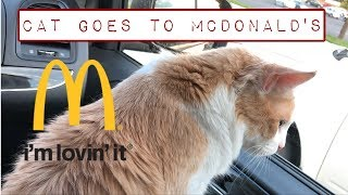 ✨ Cat Goes To McDonald's
