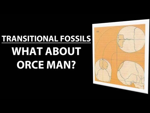 Transitional Fossils - Orce Man