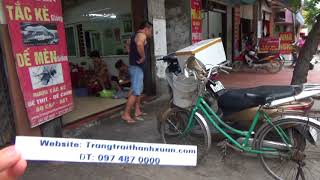 Chăn nuôi côn trùng bao tiêu đầu ra dế mèn tắc kè bọ cạp tại Cao Bằng